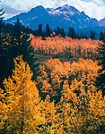 Autumn Aspen,Gore Range Colorado