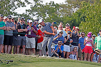 Brooks Koepka (USA) chips on the 12th hole during the 118th U.S. Open Championship at Shinnecock Hills Golf Club in Southampton, NY, USA. 17th June 2018.<br /> Picture: Golffile | Brian Spurlock<br /> <br /> <br /> All photo usage must carry mandatory copyright credit (&copy; Golffile | Brian Spurlock)
