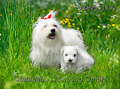 Marek, ANIMALS, REALISTISCHE TIERE, ANIMALES REALISTICOS, dogs, photos+++++,PLMP3119,#a#, EVERYDAY