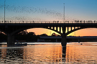 More than 1.5 million bats emerge each night at dusk, as they have for more than two decades, from the bridge's underbelly on food runs that blacken the downtown Austin, Texas sky.