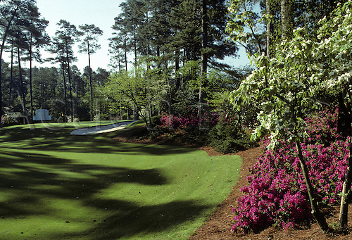 View of the foliage alongside the 10th green at the Augusta National Golf Club, Atlanta, Georgia.The Augusta National Golf Club, located in Augusta, Georgia was founded by Bobby Jones and Clifford Roberts on the site of a former indigo plantation, the course was designed by Jones and Alister MacKenzie