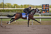 #62Fasig-Tipton Florida Sale,Under Tack Show. Palm Meadows Florida 03-23-2012 Arron Haggart/Eclipse Sportswire.