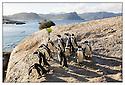 Afrique du Sud<br /> Cap de Bonne Esp&eacute;rance<br /> Manchots