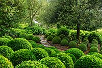 France, Indre-et-Loire (37), Amboise, château d'Amboise, jardin paysager avec boules de buis des Baléares ( (Buxus balearica)
