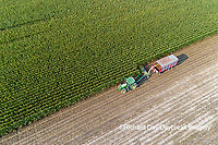 63801-10703 Farmer cutting corn for silage-aerial Marion Co. IL