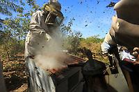 Since 1956, Africanized bees have colonized all the tropical regions of the Americas at a rate of two kilometres per day. In June 2013, a man was killed in Moody, Texas.///Depuis 1956, les abeilles africanisées ont colonisé toutes les régions tropicales des Amériques à la vitesse de deux kilomètres par jour. En juin 2013, un homme a été tué Moody au Texas.