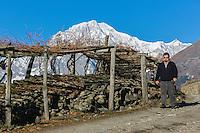 Italie, Val d'Aoste, Morgex: Ermes Pavese,  dans ses vignes  en pergola , du hameau de Villaret avec en fond le Mont Blanc // Italy, Aosta Valley, Morgex: Ermes Pavese, in vineyards, village of Villaret with Mont Blanc in the background