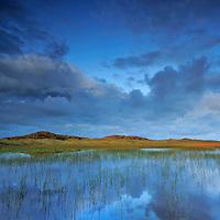 Lobelia lake, Vangså Dune Heath - National Park Thy, Denmark