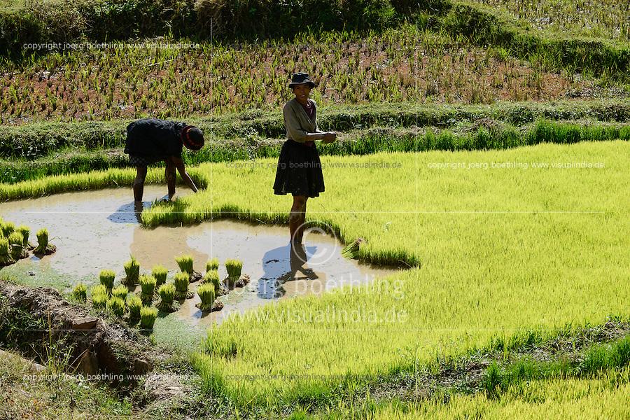 MADAGASCAR, highlands, rice cultivation, rain flooded paddy fields, women replant seedlings from nursery to field / MADAGASKAR, bewaesserte Reisfelder im Hochland bei Ambositra, Frauen pflanzen reissetzlinge um