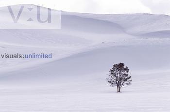 Snow covered landscape & tree Schneebedeckte Landschaft mit Baum Yellowstone National park, USA