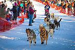 Cindy Gallea starting Iditarod 2014, Willow, Southcentral Alaska, Winter.