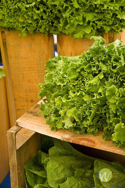 Farmers Market, Keene, NY. Lettuce