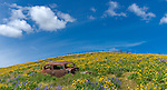 Columbia Hills State Park, Washington:<br /> Rusted car rests on a hillside of lupine an balsamroot