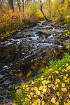 Autumn along Mill, Lundy Canyon A creek runs along fallen golden, autumn leaves on the banks.