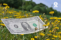 US one dollar banknotes on grass (Licence this image exclusively with Getty: http://www.gettyimages.com/detail/81867347 )