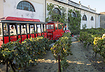 Tour group train passing grapes growing in vineyard at Gonzalez Byass bodega, Jerez de la Frontera, Cadiz province, Spain