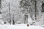 A snowy street with snow covered power lines hanging overhead