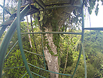 Decending From Canopy Tower, Tiputini