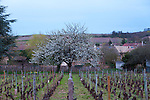 The Wine Route in early spring in Beaujolais, France. The village of Fuisse, which lies on the  border between Beaujolais and Burgandy.