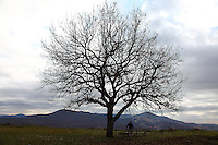 A person (a man) leaning on a bench, under a bare tree with a cloudy sky. Digitally Improved Photo.