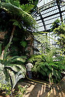 Plant History Glasshouse (formerly the Australian Glasshouse), 1830s, Charles Rohault de Fleury, Jardin des Plantes, Museum National d'Histoire Naturelle, Paris, France. Low angle view of a gardener providing cyatheales with water.