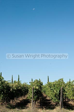 Stefano Amerighi biodynamic winery at Poggiobello di Farneta near Cortona in Tuscany, Italy