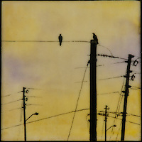 Crows on telephone poles photo transfer over encaustic painting of yellow sky.