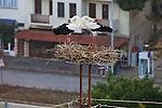 White Storks In Mating Dance