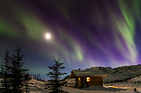 The aurora curtains over Caribou Bluff cabin and a full moon in the White Mountains National Recreation Area, interior, Alaska.