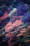 Fall color at Lake Towada in Aomori Prefecture's Hachimanti National Forest in North Honshu, Japan. Jim Bryant Photo. 2012. All Rights Reserved.