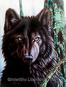 Sandi, REALISTIC ANIMALS, REALISTISCHE TIERE, ANIMALES REALISTICOS, paintings+++++BlackWolfrevised,USSN05,#a#, EVERYDAY ,wolf,wolves ,puzzles
