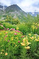 France, Hautes-Alpes (05), Villar-d'Arène, col du Lautaret, Jardin alpin du Lautaret à 2100 m d'altitude : jardin du Caucase avec en premier plan des lis à étamines soudées et des pivoines. Au fond les pic de Combeynot et cachée dans les nuages, la Meige