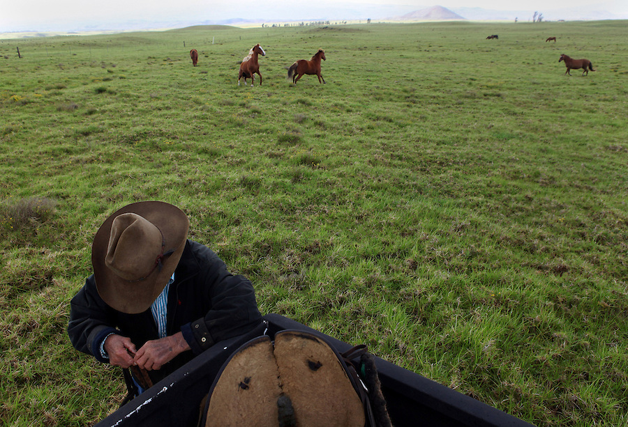 "Retired cowboy and ranch manager, Jamie Dowsett, 85, who spent most of his life on horses and has rich stories to tell, prepares a rope before riding one of his horses near his home in Waimea, Hi.  ""I'm 85 years old and I still think that cows and horses are the best things that ever walked on earth.  I would give anything if I could still be a cowboy...being out there on the land where nobody bothers you, out in the open where it's quiet...the horses are giving you a wonderful ride in the beautiful countryside...that is a feeling not many people have the opportunity to experience,"" says Dowsett wistfully."
