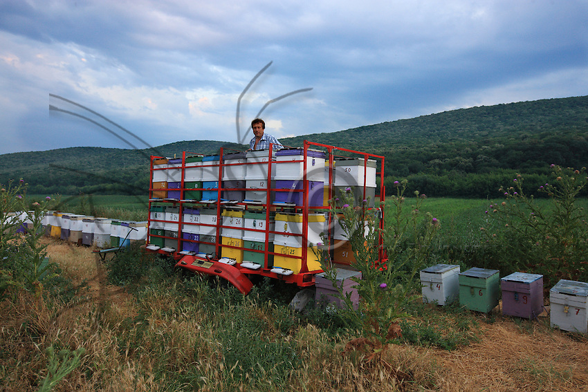 Ioan Victor Cornea, 48 years old, from Fagaras near Brasov in the region of Transylvania, has traveled 400 km to set up his 30 hives in the forest of Ciucurova. A teacher the rest of the year, beekeeping is for him a passion and an income supplement.