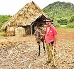 A Cuban tobacco farmer smoking a handled cigar with his horse horse near Vinales, Cuba