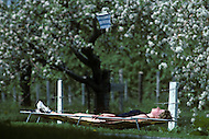 Ile D'Orleans, Quebec City Area, Canada, June 8, 1984. Sunbathing in the Summer afternoon.
