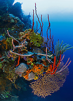 TR0071-D. A variety of sponge species, as well corals, sea fans, sea rod gorgonians, and algaes decorate an outcropping 80 feet deep along a sheer wall plunging downward from the reef. Cayman Islands, Caribbean Sea.<br /> Photo Copyright &copy; Brandon Cole. All rights reserved worldwide.  www.brandoncole.com