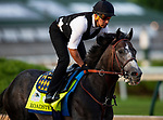 LOUISVILLE, KENTUCKY - MAY 01: Roadster with Humberto Gomez up prepares for the Kentucky Derby at Churchill Downs in Louisville, Kentucky on May 01, 2019. Evers/Eclipse Sportswire/CSM