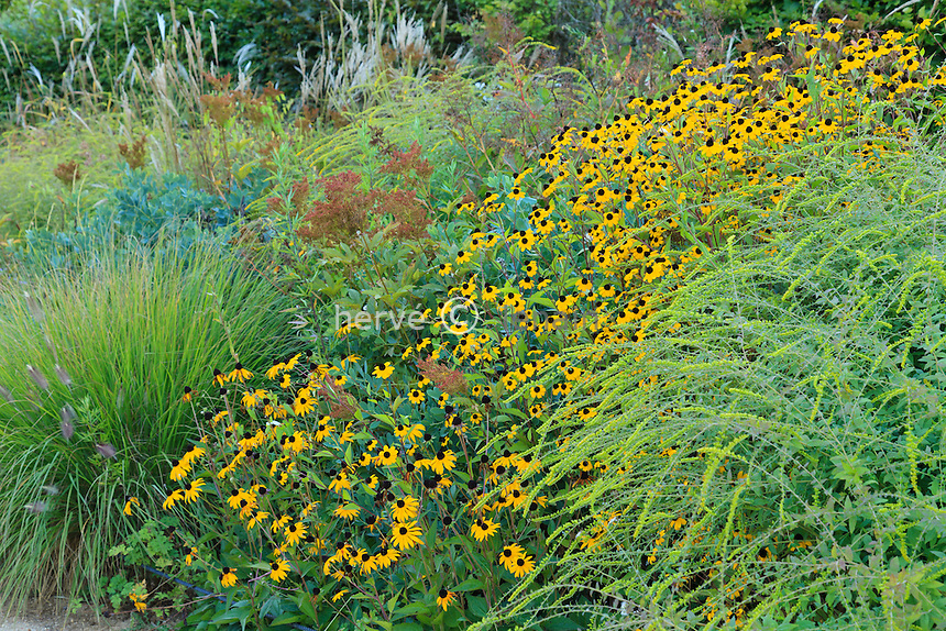 Massif de plantes vivaces en automne, rudbeckia, graminées...(France, Chaumont-sur-Loire, Festival International des Jardins) // In fall, perennials, Rudbeckia, grass ...(France, Chaumont-sur-Loire, Festival International des Jardins)