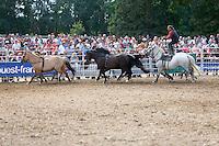 Yannick GICQUEL, spectacle equestre Tao Horse Show