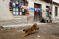 A dog stretches and washing hangs out to dry outside the homes of the miners in Oruro during the Carnaval de Oruro. During the fiesta many people sacrifice llamas and give offerings such as coca leaves and cigarettes to show their dedication to the Devil, a Virgin, Pachamama or Mother Earth. The Devil (or Uncle) is a mythical character that protects the miners of Oruro who work in dangerous conditions hundreds of metres below the ground. During the carnival, people dress in outrageous costumes and dance for days before arriving at the Church of Socavon, where they pay their respects to a virgin. Ironically, many of the dancers wear devil costumes.