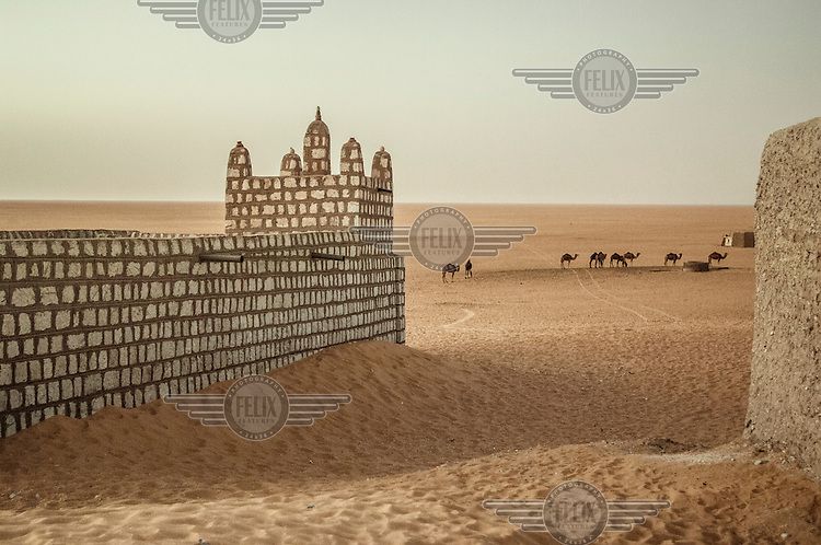 Camels and buildings in the Arab Moor town of Boujbeja in the Sahara Desert. /Felix Features
