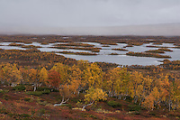 Lake Tärnasjön in autumn along Kungsleden trail in Vindelfjällen nature reserve, Lapland, Sweden