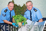 Sgt Leo Randles and Sgt Ray Walsh pictured with some of the growing equipment and cannabis found in Killarney on Mionday.