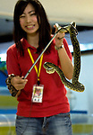 "A staffer gives a demonstration of a habu snake, which is used in ""habushu,"" the awamori-based liquor that includes extracts of the highly venomous snake,  at Oknawa World in Naha, Okinawa Prefecture, Japan, on June 20, 2012. Photographer: Robert Gilhooly"