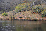 Marsh Crocodile,Ranthambhore National Park; Rajasthan