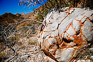 Image Ref: CA530<br />
