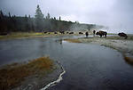 bison on Firehole Lake Drive