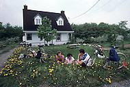 Ile D'Orleans, Quebec City Area, Canada, June 8, 1984. Little break in the nature.