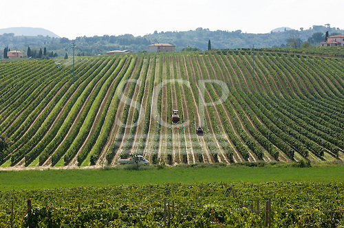 Tuscany, Italy. Vineyards with rows of grapevines and tractor.